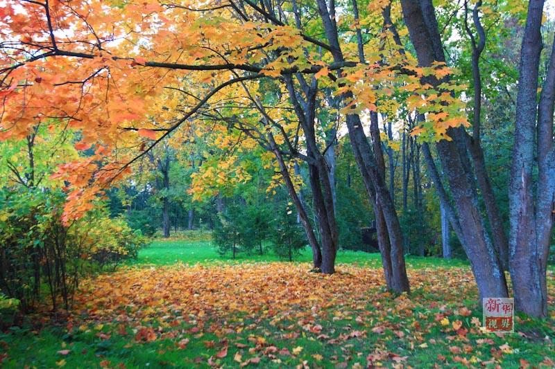 风景 秋天的色彩