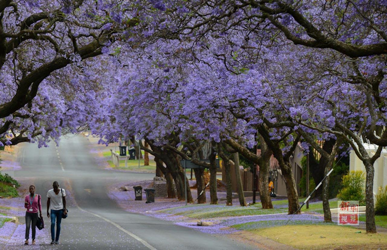 景丨满城尽赏 紫薇花