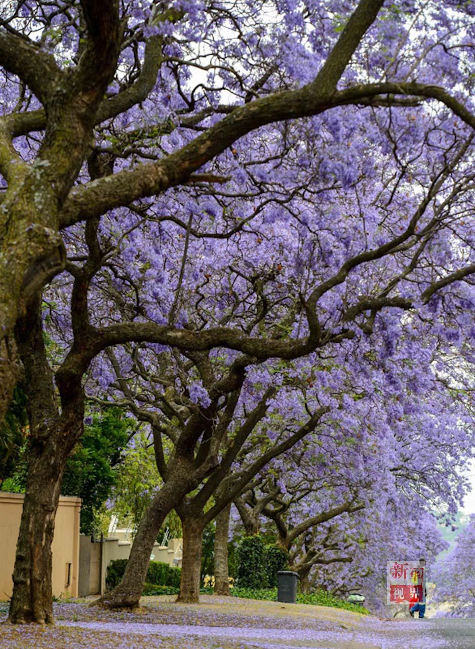 风景图片大全花树