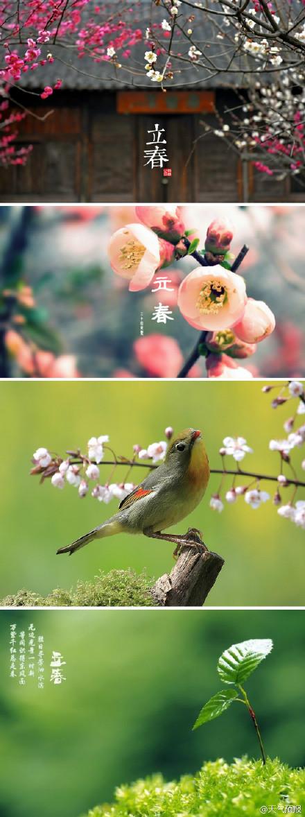 立春的动态图片可爱