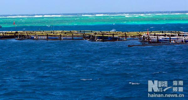南沙岛礁:生态保护建设绿意盎然