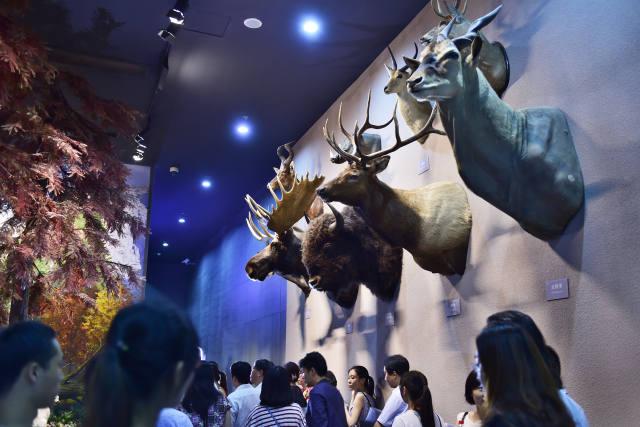 """观众在""""北美森林""""展区观看野生动物标本"""