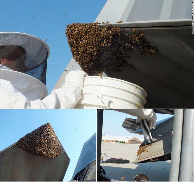 蜜蜂(图片来源:互联网)