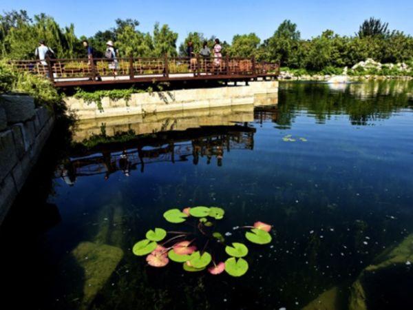 8月16日,工作人员在清理圆明园遗址公园廓然大公景区水循环系统内的有害植物。 当日起,完成水生态修复工程的北京圆明园遗址公园廓然大公景区对外开放。 圆明园技术部门通过生态修复的方法构建沉水植物水生动物微生物群落共生系统,从而实现水质净化,提升廓然大公遗址的整体景观效果。