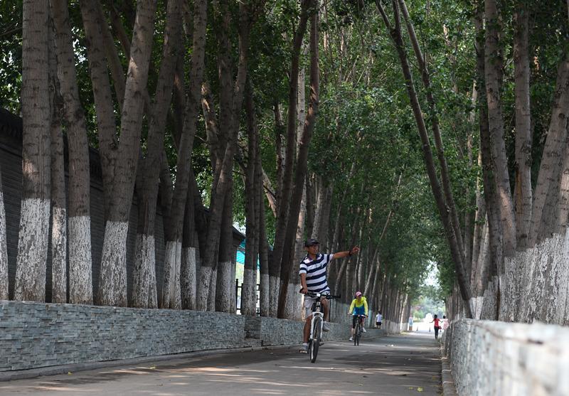 8月1日,两名骑行者在北京大运河森林公园骑行,大运河森林公园园内栽种了40余万株树木,是市民的天然氧吧。新华社记者 罗晓光 摄