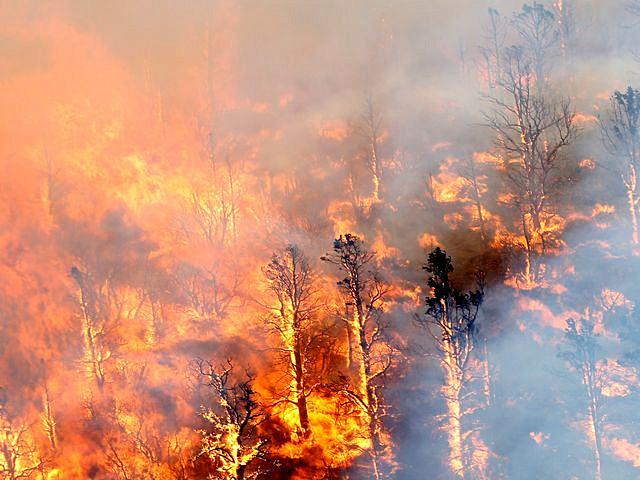 8月17日,美国加利福尼亚州山火肆虐。(图片来源:新华/路透)