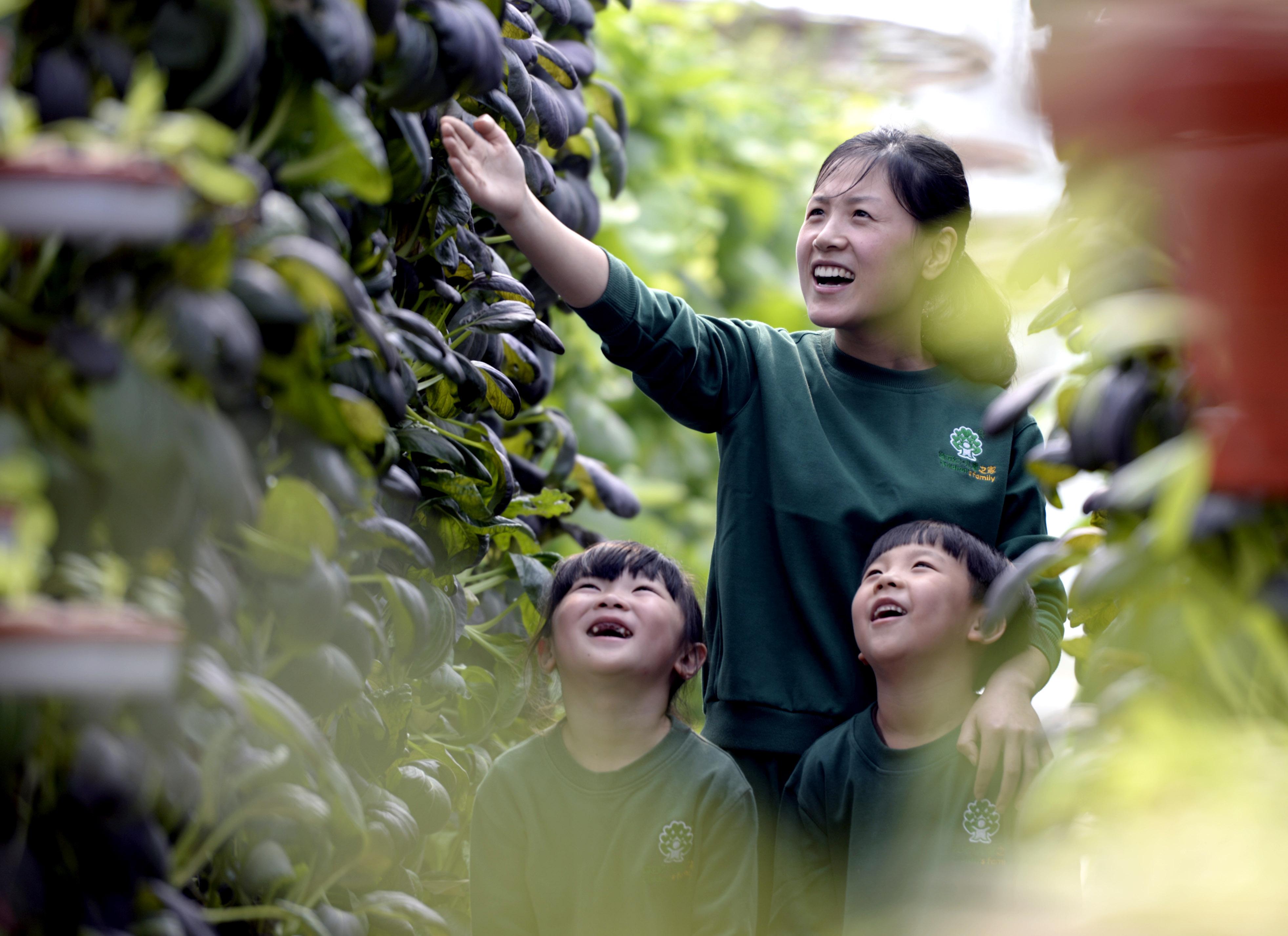 ↑10月19日,老师李晓飞向小朋友们讲解紫油菜的种植知识。CICPHOTO/霍红军 摄
