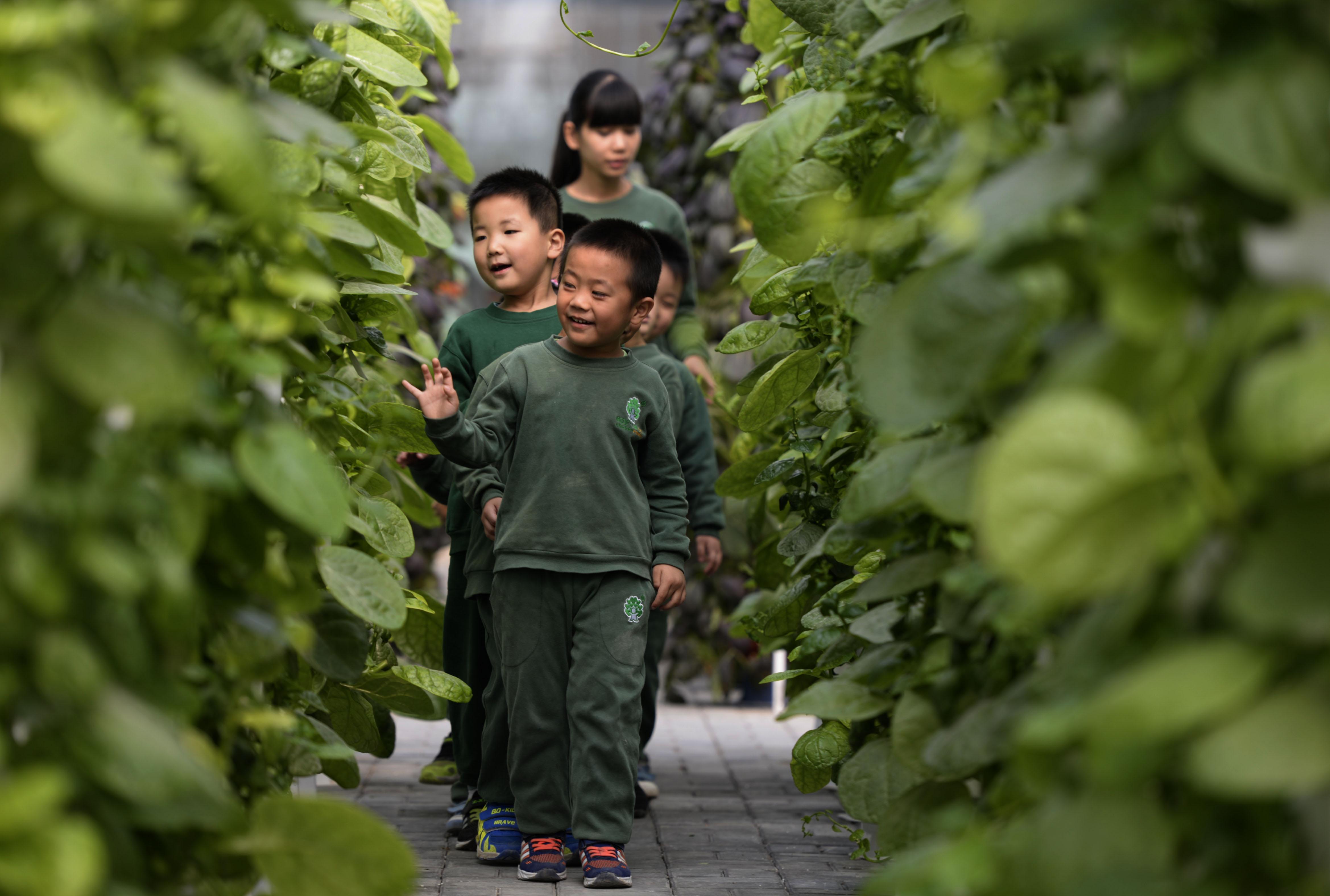↑10月19日,小朋友们在老师的带领下参观温室大棚。CICPHOTO/霍红军 摄
