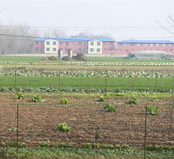 麦地里凸起的坟冢是文楼村民们难以忘怀的过去。新华社记者李安摄