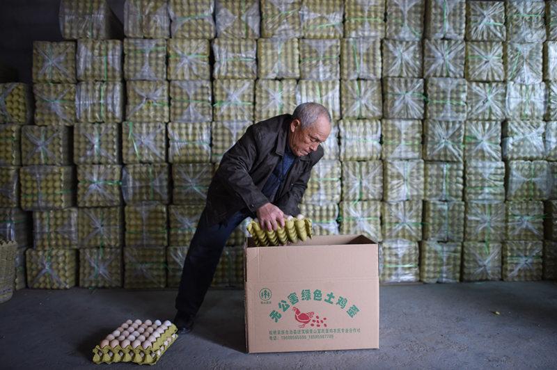 2月25日,贵州松桃县青山村富民蛋鸡养殖专业合作社的村民正在包装鸡蛋,养殖场所生产的鸡蛋几乎全部通过电商平台销售。新华社记者 刘续 摄