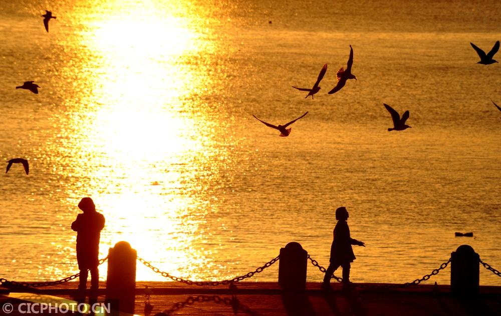 ↑1月10日,游人在辽宁大连星海广场南侧海域夕阳中观赏海鸥。CICPHOTO/吕文正 摄
