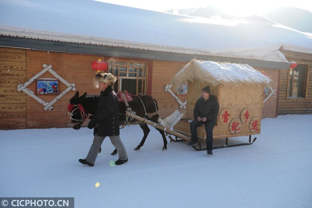 ↑1月19日,在黑龙江省大海林林业局雪乡景区,商贩配送货物。