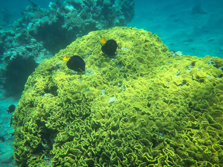 探访埃拉特的海底世界