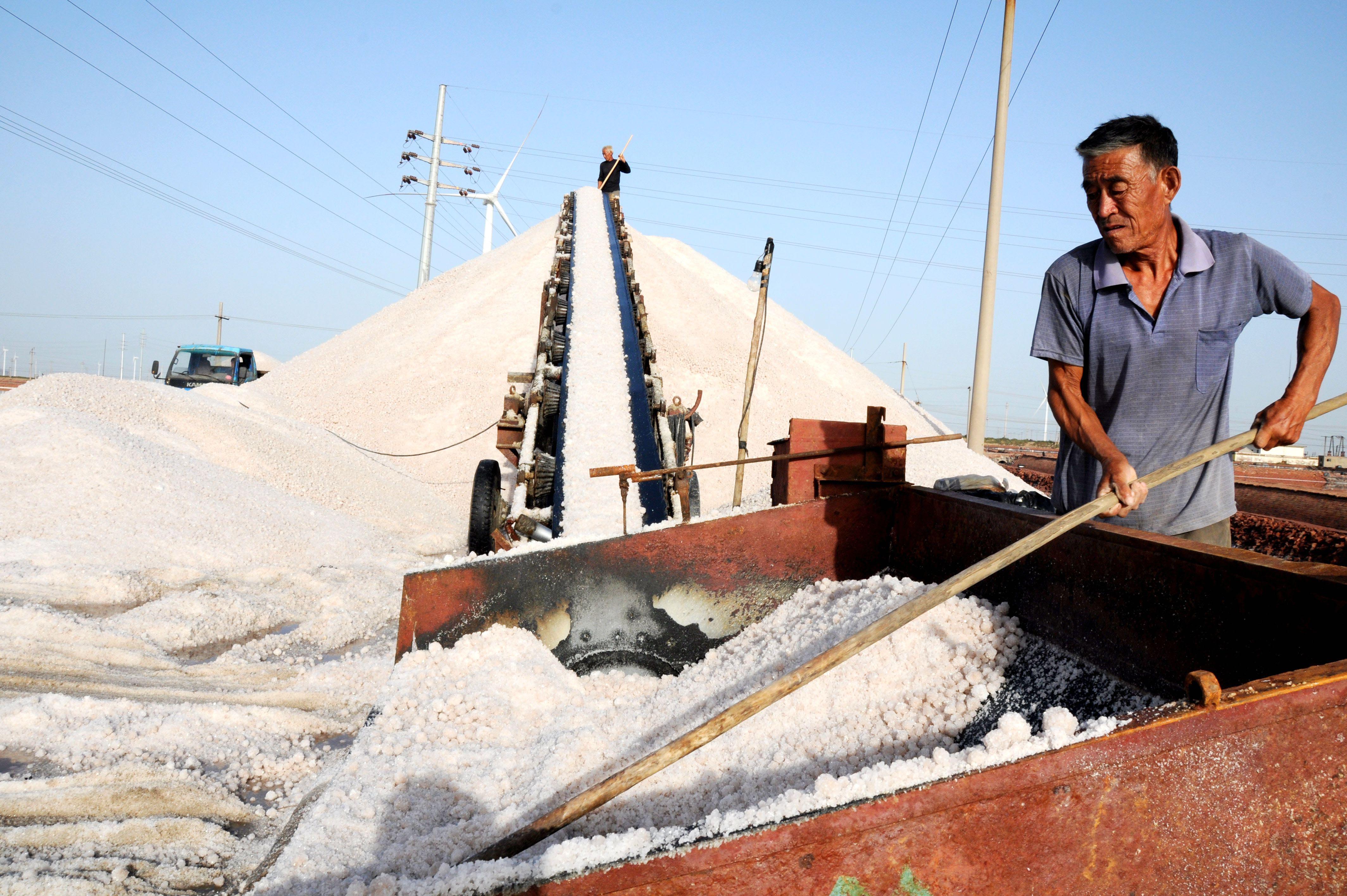 近日,位于山东省滨州市北海经济开发区的埕口盐场的30万亩秋盐进入