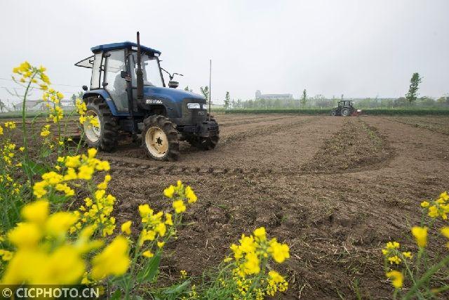 ↑4月20日,江苏省海安县城东镇一农业合作社的工作人员在用大型