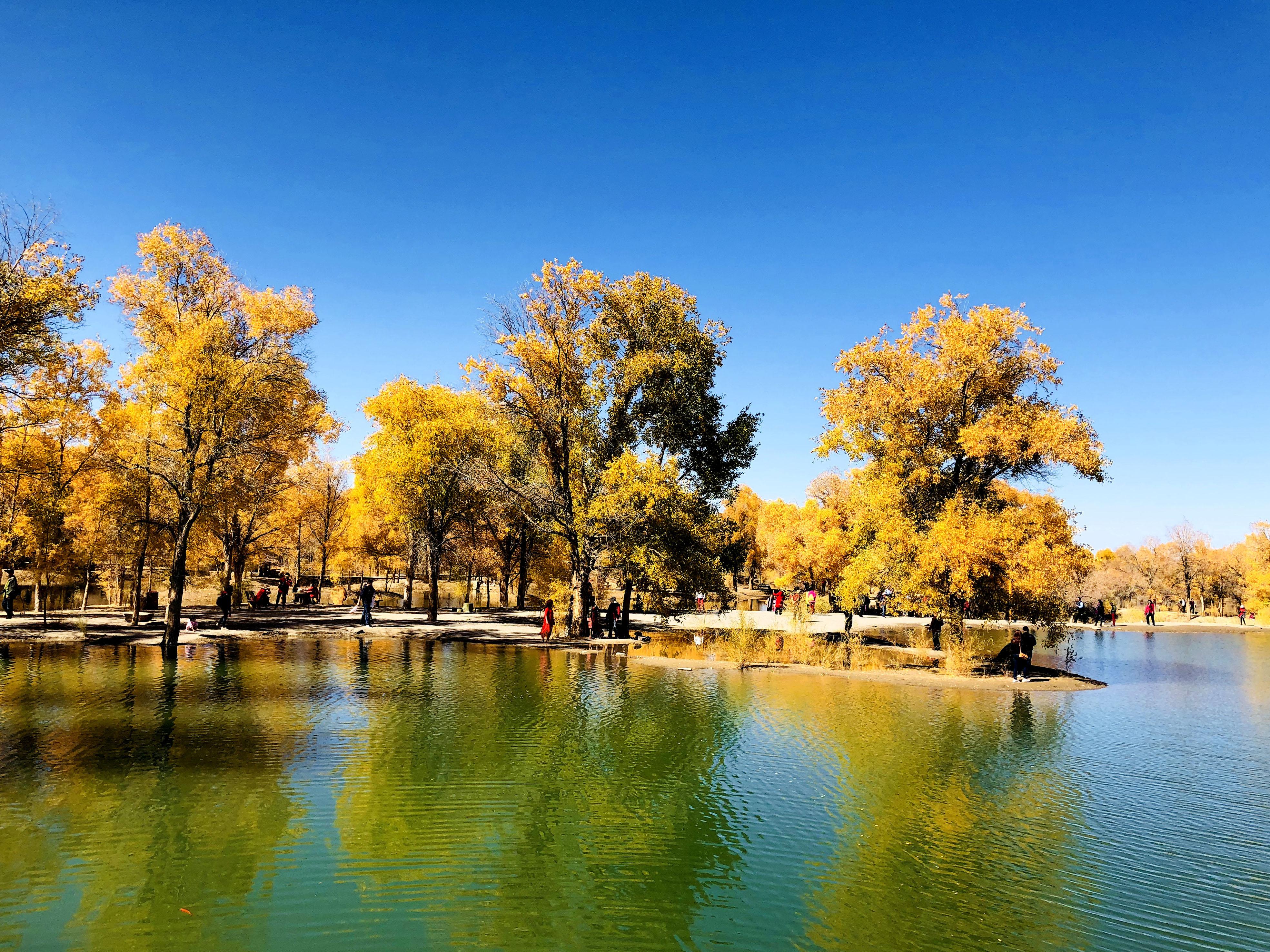 这是10月9日在酒泉市金塔沙漠森林公园拍摄的胡杨林美景.图片