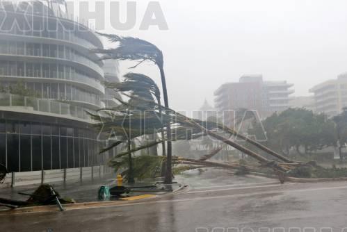 9月10日,在美国佛罗里达州迈阿密,棕榈树被风吹倒。(新华社/美联)