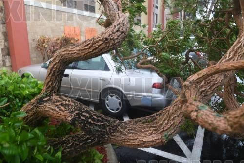 9月10日,在美国佛罗里达州迈阿密,一棵树被大风吹倒后压在汽车上。( 新华社记者殷博古摄)