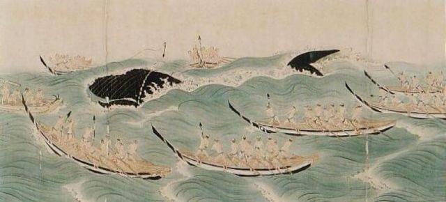 日本退群!为什么他们还是无法放弃吃鲸?