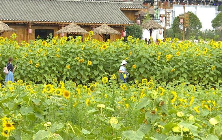 【新华社客户端】仁怀:蔺田山庄香满路 盛夏避暑好去处