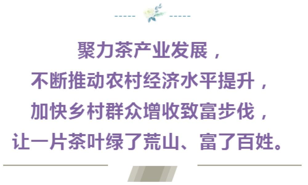 【新华社客户端】仁怀卫星村:满山披绿美乡村 一片茶园话振兴