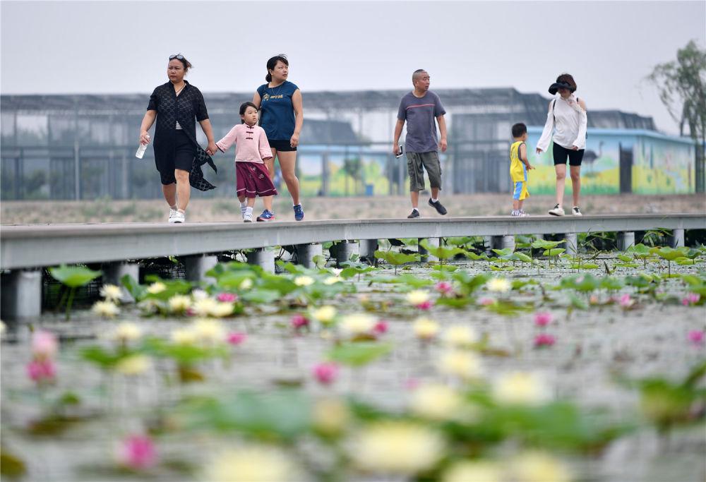 """天津赵庄子村:甩掉穷帽子 吃上""""生态饭"""""""