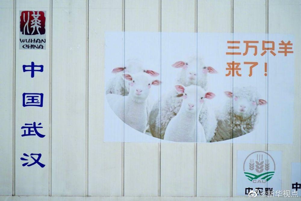 《【恒达娱乐注册官网】羊羊羊羊羊到了!蒙古国首批捐赠羊已运抵武汉》