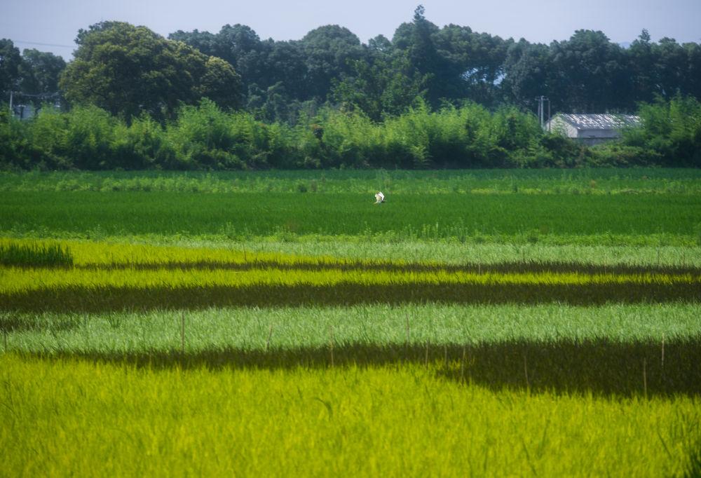 浙江湖州积极推进现代农业发展